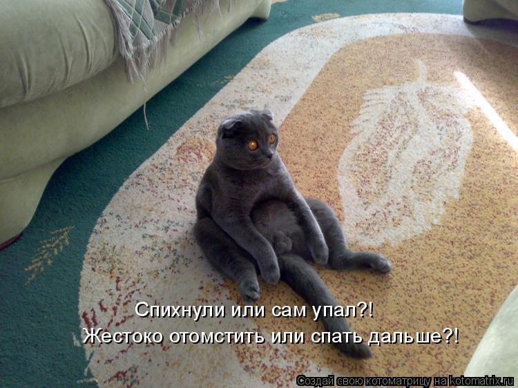 Котоматриця!)))) - Страница 3 426738
