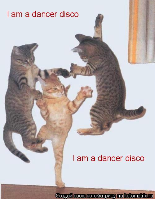 Котоматрица: I am a dancer disco I am a dancer disco