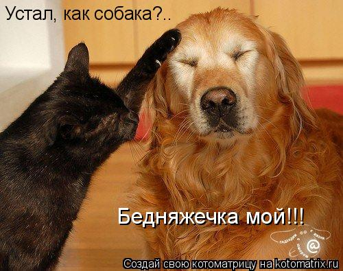 Котоматрица: Устал, как собака?.. Бедняжечка мой!!!
