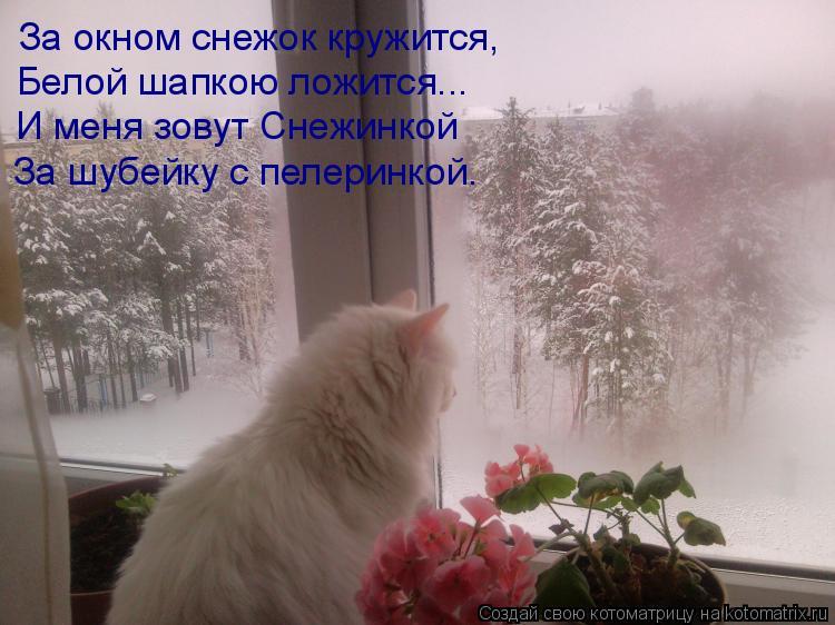 Котоматрица: За окном снежок кружится, Белой шапкою ложится... И меня зовут Снежинкой За шубейку с пелеринкой.