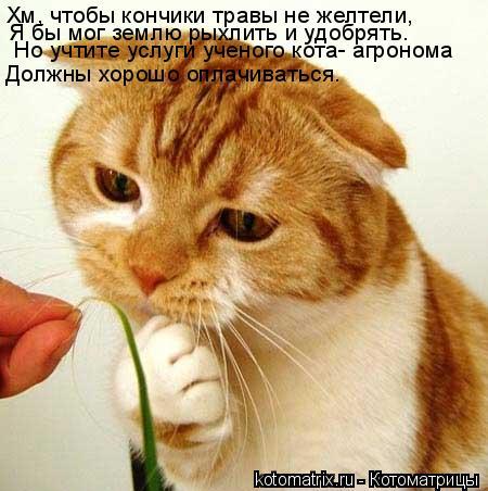 Котоматрица: Хм, чтобы кончики травы не желтели, Я бы мог землю рыхлить и удобрять. Но учтите услуги ученого кота- агронома  Должны хорошо оплачиваться.