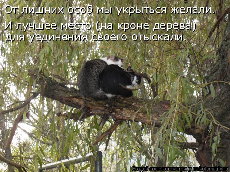 Котоматрица: От лишних особ мы укрыться желали. И лучшее место (на кроне дерева) для уединения своего отыскали.
