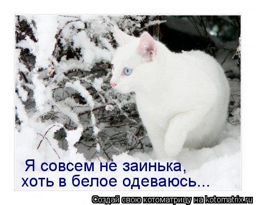 Котоматрица: Я совсем не заинька, хоть в белое одеваюсь...