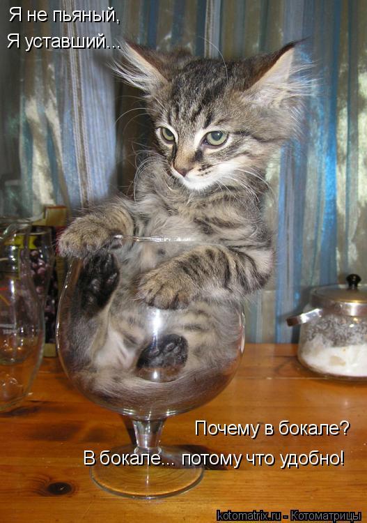 Котоматрица: Я не пьяный,  Я уставший... Почему в бокале? В бокале... потому что удобно!