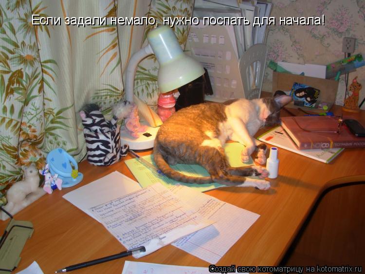 Котоматрица: Если задали немало, нужно поспать для начала!