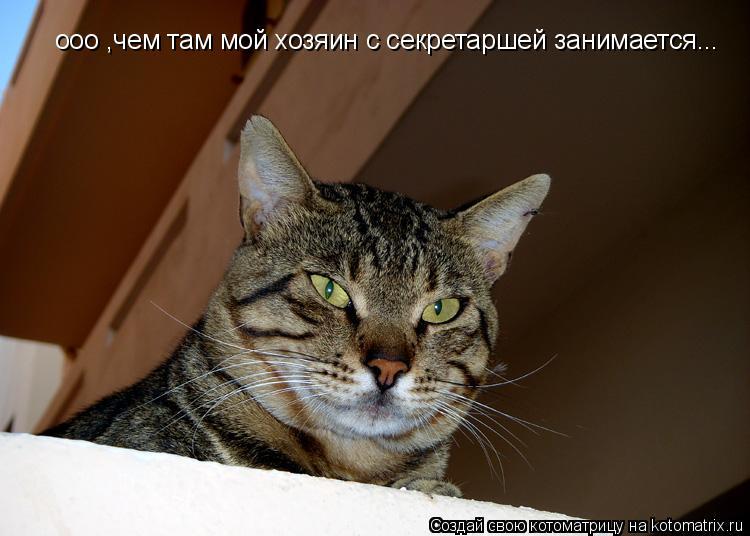 Котоматрица: ооо ,чем там мой хозяин с секретаршей занимается...