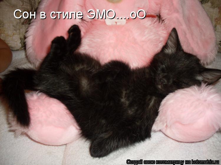 Котоматрица: Сон в стиле ЭМО....оО