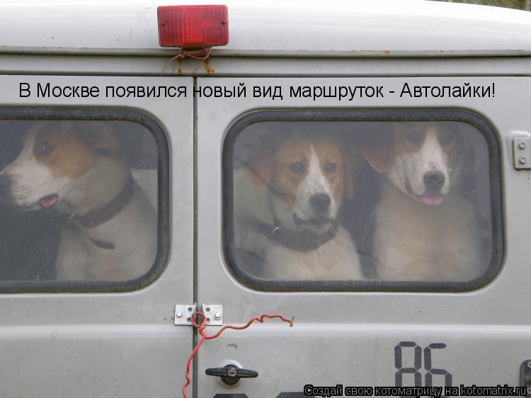 Котоматрица: В Москве появился новый вид маршруток - Автолайки!