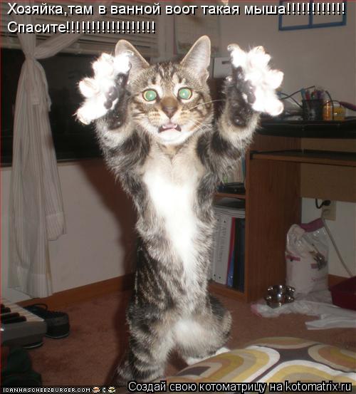 Котоматрица: Хозяйка,там в ванной воот такая мыша!!!!!!!!!!!! Спасите!!!!!!!!!!!!!!!!!!