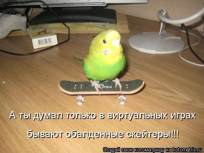 Котоматрица: А ты думал только в виртуальных играх бывают обалденные скейтеры!!!