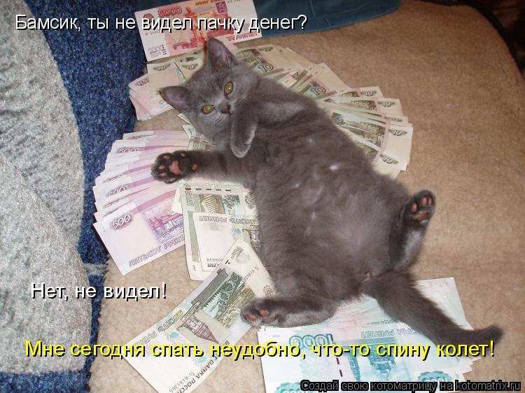 Котоматрица: Бамсик, ты не видел пачку денег? Нет, не видел! Мне сегодня спать неудобно, что-то спину колет!