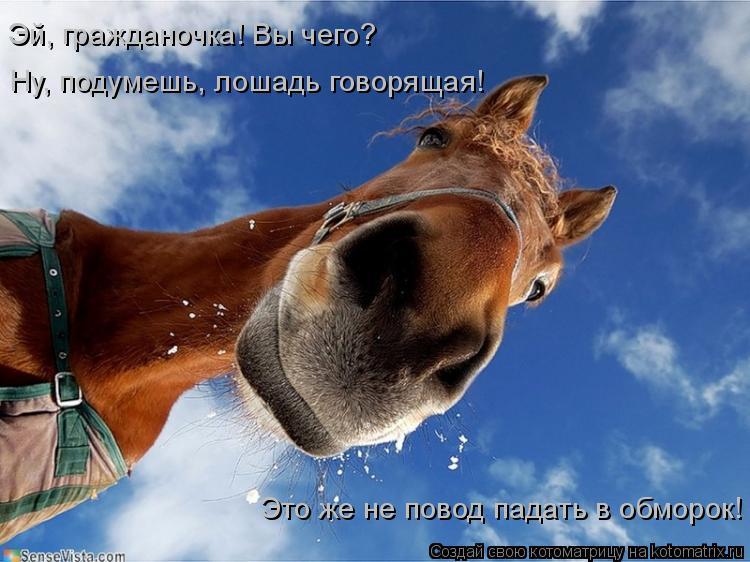 Котоматрица: Ну, подумешь, лошадь говорящая! Эй, гражданочка! Вы чего? Это же не повод падать в обморок!
