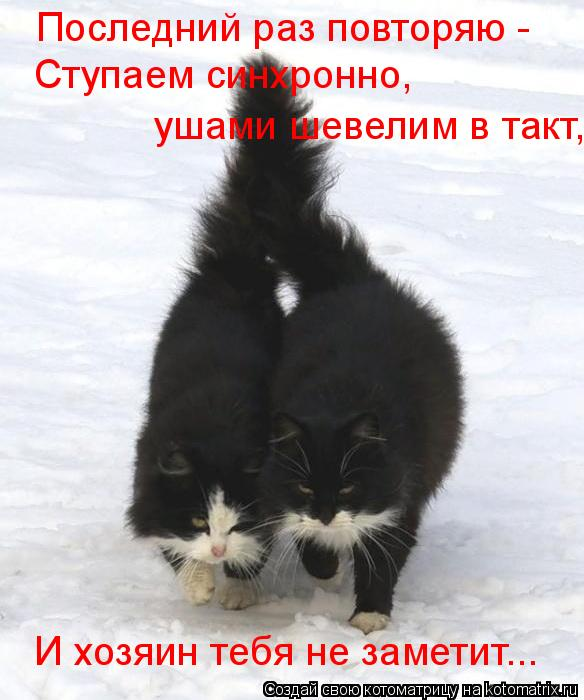 Котоматрица: Последний раз повторяю -  Ступаем синхронно,  ушами шевелим в такт, И хозяин тебя не заметит...
