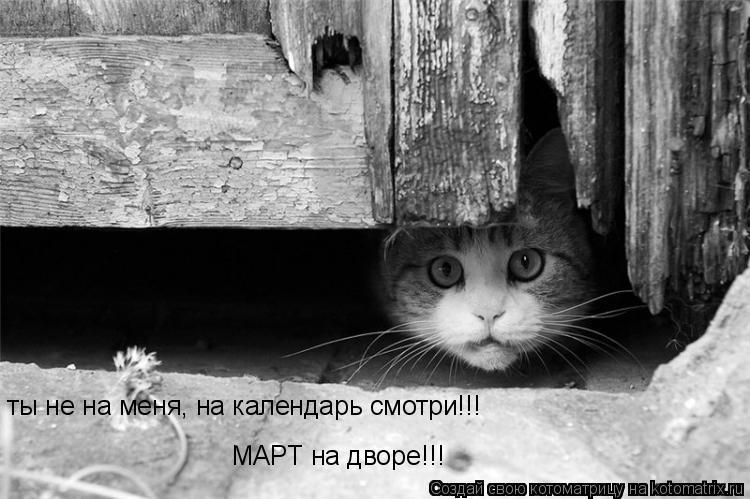 Котоматрица: ты не на меня, на календарь смотри!!! МАРТ на дворе!!!