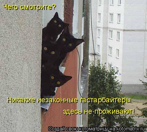 Котоматрица: Никакие незаконные гастарбайтеры  здесь не проживают! Чего смотрите?