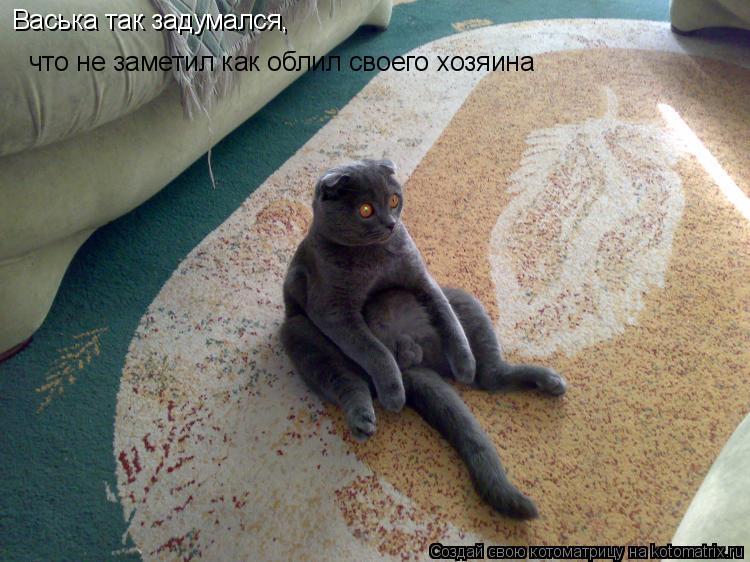 Котоматрица: Васька так задумался, что не заметил как облил своего хозяина