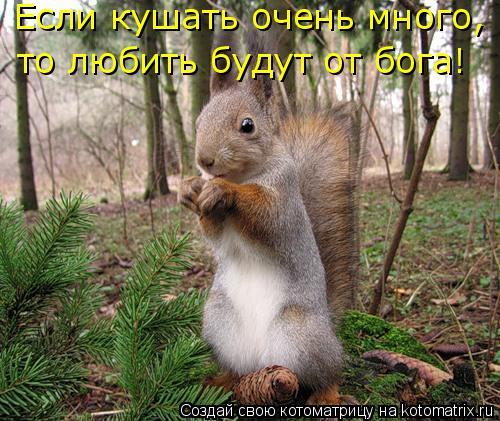 Котоматрица: Если кушать очень много, то любить будут от бога!