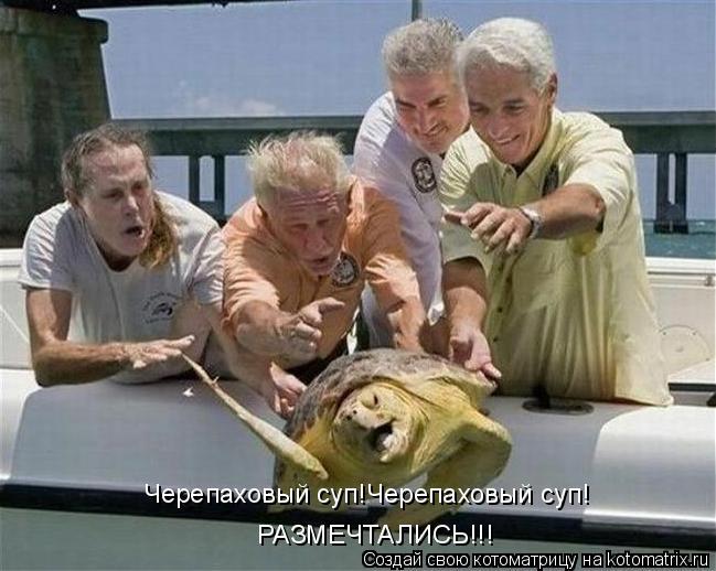 Котоматрица: Черепаховый суп!Черепаховый суп! РАЗМЕЧТАЛИСЬ!!!