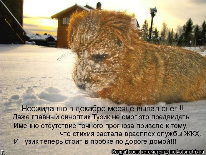 Котоматрица: Неожиданно в декабре месяце выпал снег!!! Именно отсутствие точного прогноза привело к тому, что стихия застала врасплох службы ЖКХ. И Тузик