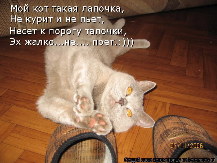 Котоматрица: Мой кот такая лапочка, Не курит и не пьет, Несет к порогу тапочки, Эх жалко...не.... поет.:)))