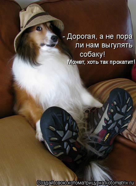 Котоматрица: - Дорогая, а не пора  ли нам выгулять  собаку! Может, хоть так прокатит!