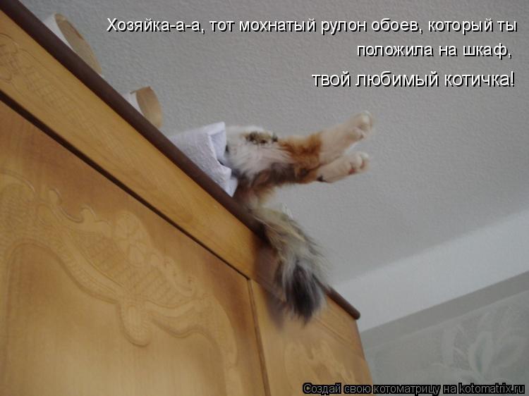 Котоматрица: Хозяйка-а-а, тот мохнатый рулон обоев, который ты  положила на шкаф,  твой любимый котичка!