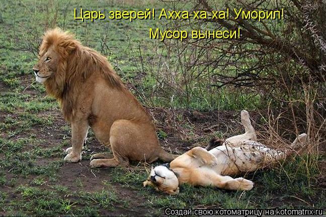 Котоматрица: Царь зверей! Ахха-ха-ха! Уморил! Мусор вынеси!