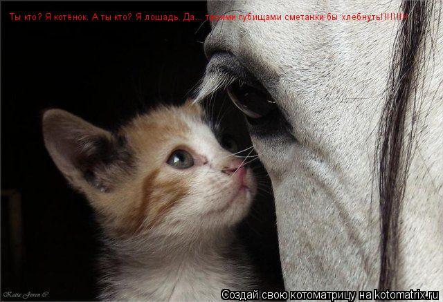 Котоматрица: Ты кто? Я котёнок. А ты кто? Я лошадь. Да... твоими губищами сметанки бы хлебнуть!!!!!!!!!