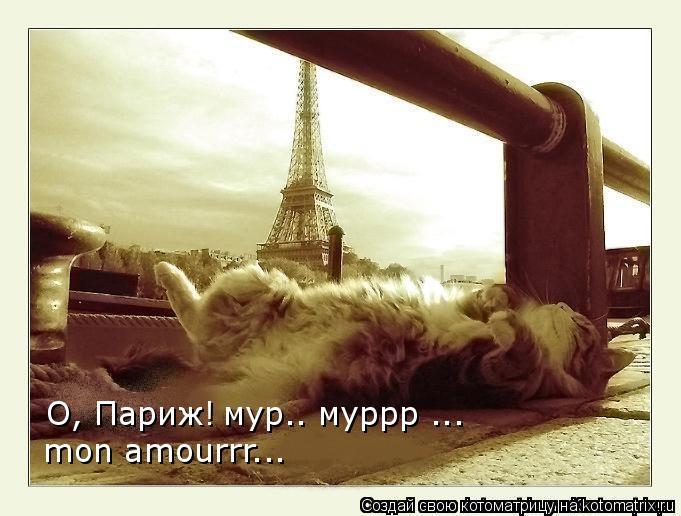 Котоматрица: О, Париж! мур.. муррр ... mon amourrr...
