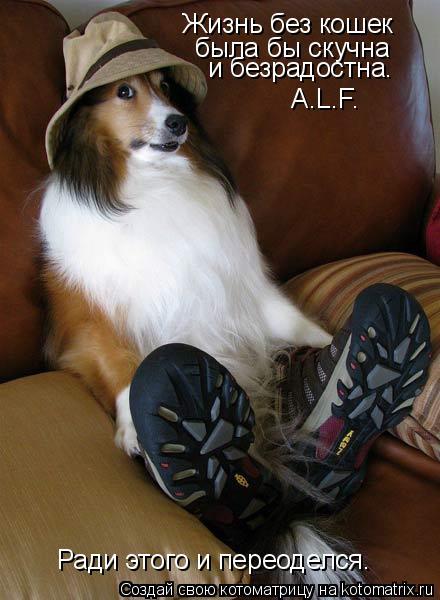 Котоматрица: Жизнь без кошек была бы скучна и безрадостна.  «A.L.F.»  Ради этого и переоделся.
