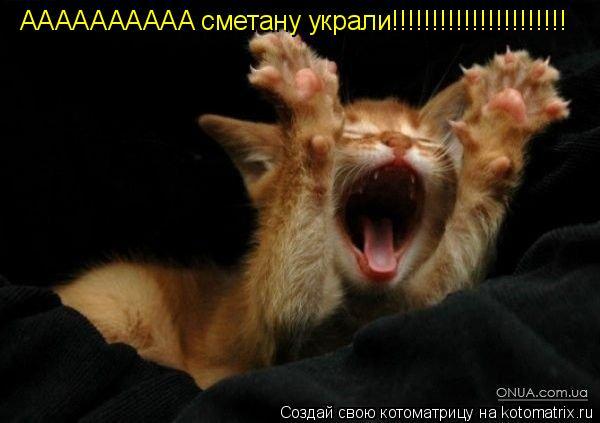 Котоматрица: AAAAAAAAAA сметану украли!!!!!!!!!!!!!!!!!!!!!!