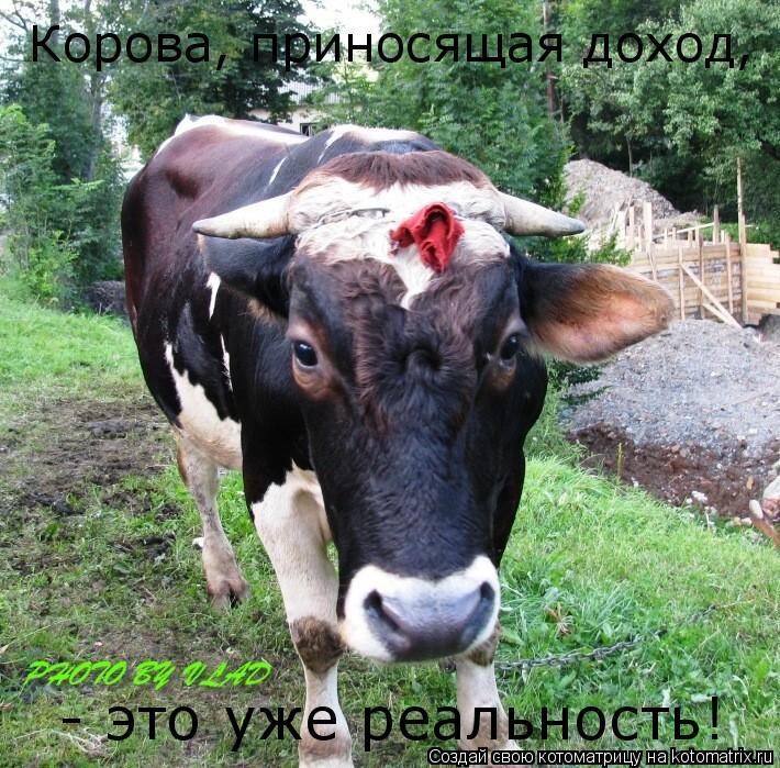 Котоматрица: Корова, приносящая доход,  - это уже реальность!