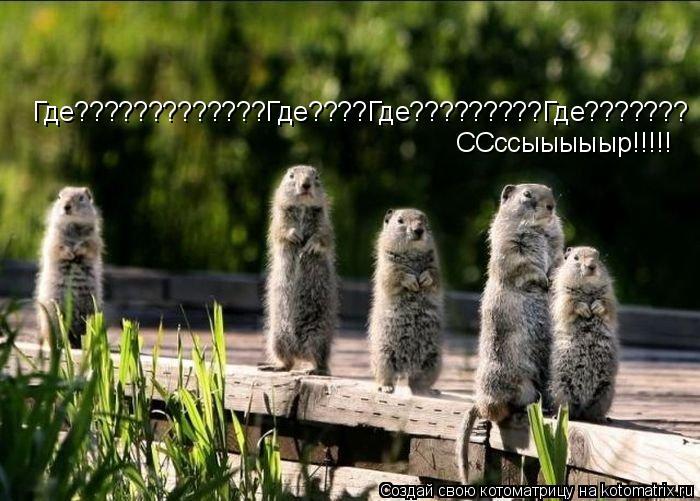 Котоматрица: ССссыыыыыр!!!!! Где?????????????Где????Где?????????Где???????