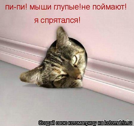 Котоматрица: пи-пи! мыши глупые!не поймают! я спрятался!