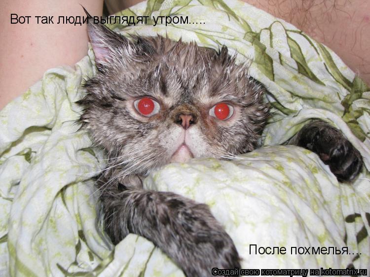 Котоматрица: Вот так люди выглядят утром..... После похмелья....
