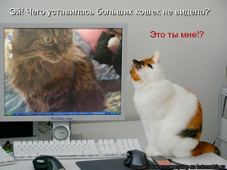Котоматрица: Эй! Чего уставилась больших кошек не видела? Это ты мне!?