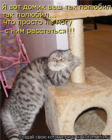 Котоматрица: Я вот домик ваш так полюбил так полюбил... что просто не могу  с ним расстаться!!!