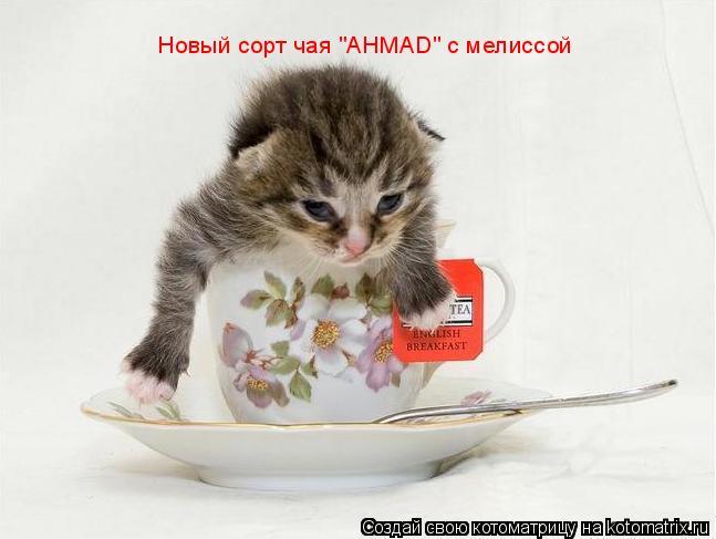 """Котоматрица: Новый сорт чая """"AHMAD"""" с мелиссой"""