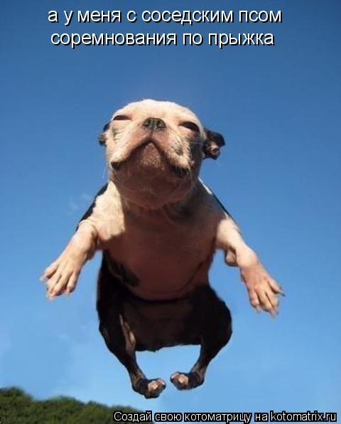 Котоматрица: а у меня с соседским псом соремнования по прыжка  а у меня с соседским псом  соремнования по прыжка  соремнования по прыжка
