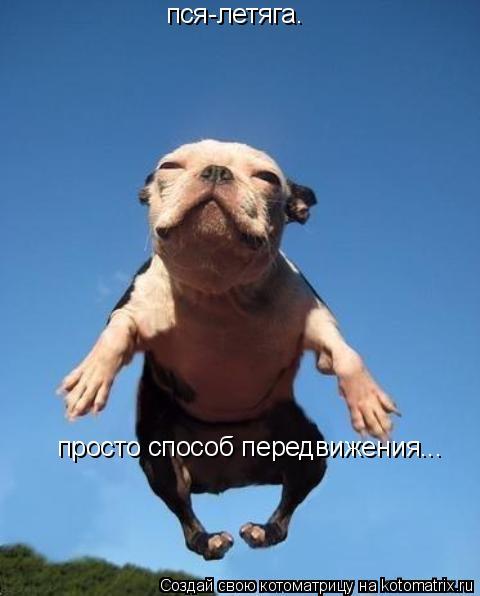 Котоматрица: пся-летяга. просто способ передвижения...