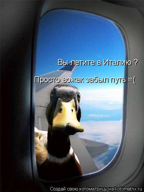 Котоматрица: Вы летите в Италию ? Просто вожак забыл путь =(