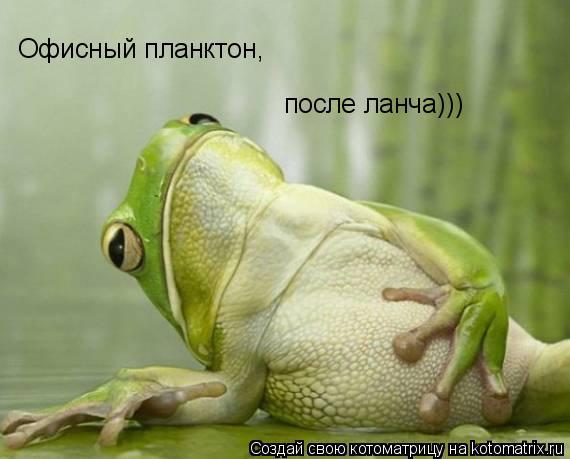 Котоматрица: Офисный планктон, после ланча)))
