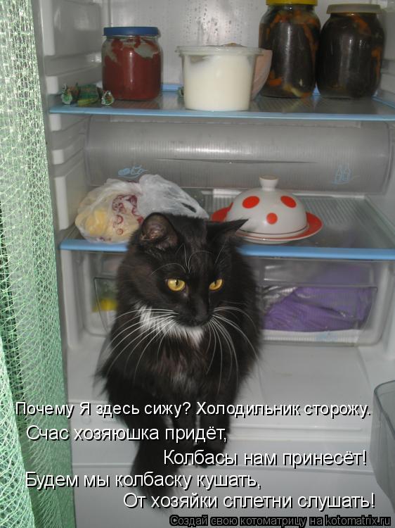 Котоматрица: От хозяйки сплетни слушать! Будем мы колбаску кушать, Колбасы нам принесёт! Счас хозяюшка придёт, Почему Я здесь сижу? Холодильник сторожу.