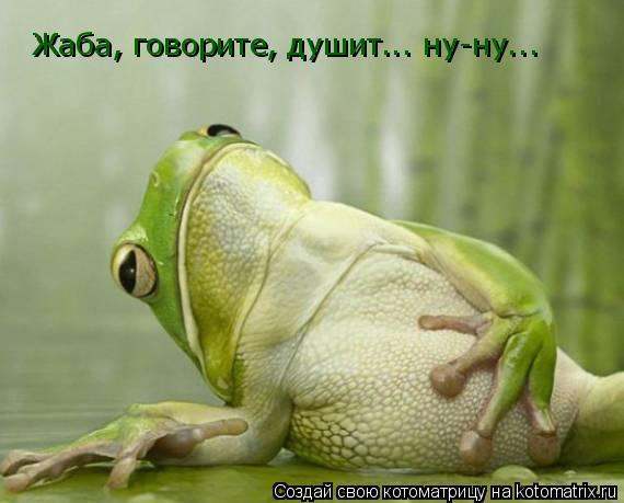 Котоматрица: Жаба, говорите, душит... ну-ну...