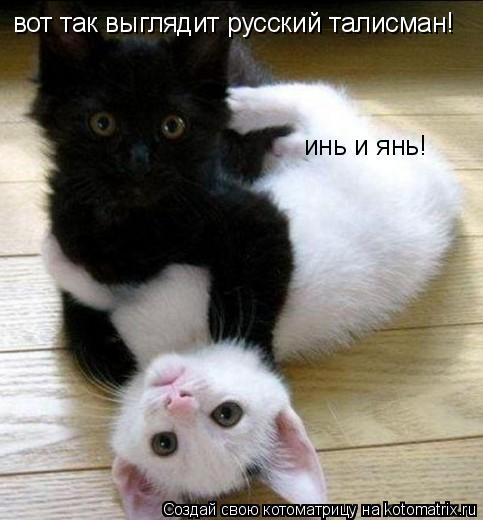 Котоматрица: инь и янь! вот так выглядит русский талисман!
