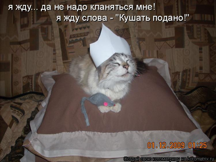"Котоматрица: я жду... да не надо кланяться мне! я жду слова - ""Кушать подано!"""