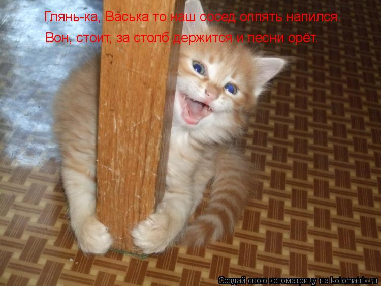 Котоматрица: Глянь-ка, Васька то наш сосед оппять напился. Вон, стоит, за столб держится и песни орёт.