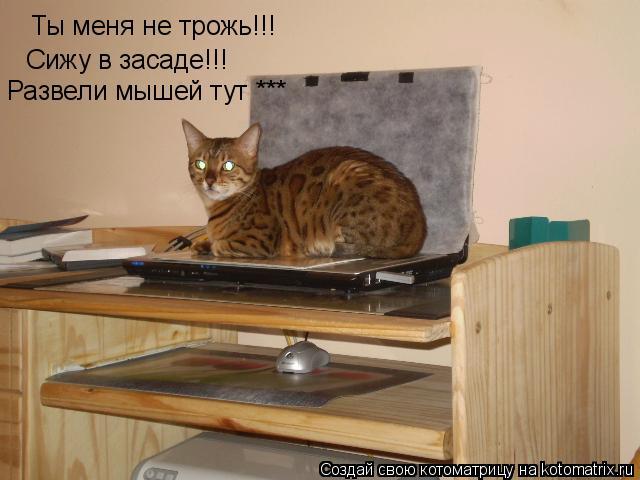 Котоматрица: Ты меня не трожь!!! Сижу в засаде!!! Развели мышей тут ***