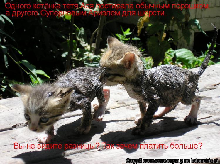 Котоматрица: Одного котёнка тетя Ася постирала обычным порошком, а другого Суперновым Ариэлем для шерсти. Вы не видите разницы? Так зачем платить больше