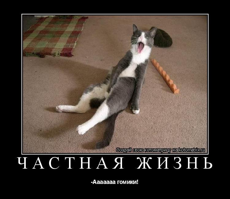Котоматрица: Частная жизнь -Ааааааа гомики!